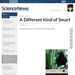 A Different Kind of Smart