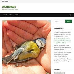 Dead Bird Nests Contain 36 Different Pesticides, Including DDT