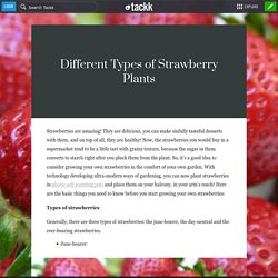 Different Types of Strawberry Plants