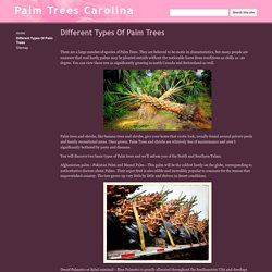 Different Types Of Palm Trees