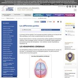 Les différentes parties - Le cerveau
