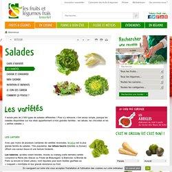 Les salades : différentes variétés (laitues, chicorées, petites salades)