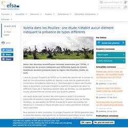 EFSA 18/08/16 Xylella dans les Pouilles: une étude n'établit aucun élément indiquant la présence de types différents