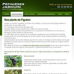 Les différents plants de figuiers des Pépinieres Jabouin