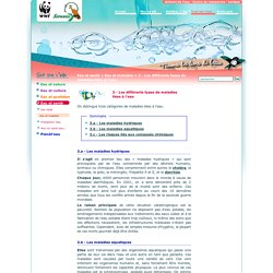 3 - Les différents types de maladies liées à l'eau / Eau et maladies / L'eau, source de vie / Eau et santé / Tout sur l'eau / Sololiya - WWF Sololiya