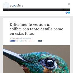 Difícilmente verás a un colibrí con tanto detalle como en estas fotos