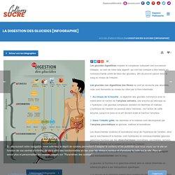 La digestion des glucides [Infographie]