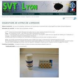 Digestion in vitro de l'amidon - SVT Lyon