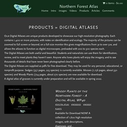 Northern Forest Atlas