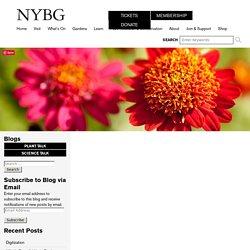 Digitization at NYBG