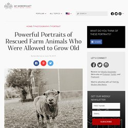 Dignified Farm Animal Photos of Rescued Creatures Allowed to Grow Old