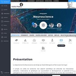 David Digregorio - Neuroscience