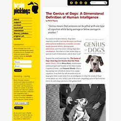 The Genius of Dogs and a Dimensional Definition of Human Intelligence