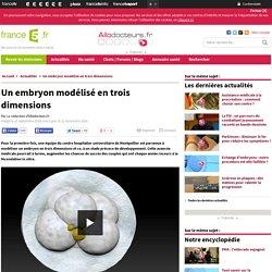 Un embryon modélisé en trois dimensions