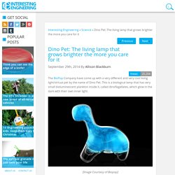 Dino Pet: The living lamp that grows brighter the more you care for it