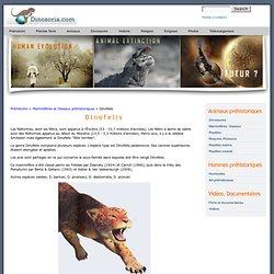 Animal Prehistorique. Dinofelis. En Images