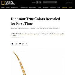 Dinosaur True Colors Revealed for First Time by Feather Study