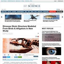 Dinosaur Brain Structure Modeled From Birds & Alligators In New Study