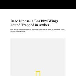 Rare Dinosaur-Era Bird Wings Found Trapped in Amber