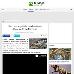 Une queue géante de dinosaure découverte au Mexique