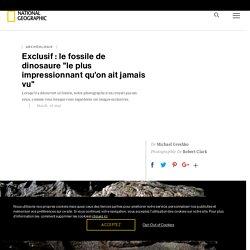 """Exclusif : le fossile de dinosaure """"le plus impressionnant qu'on ait jamais vu"""""""