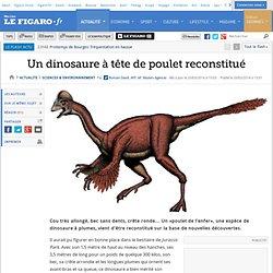 Un dinosaure à tête de poulet reconstitué