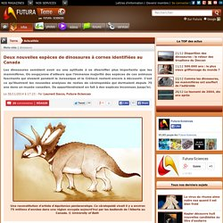 Deux nouvelles espèces de dinosaures à cornes identifiées au Canada