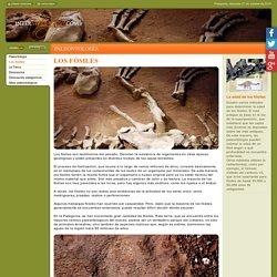 Dinosaurios y restos fósiles en la Patagonia Argentina