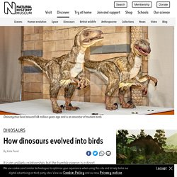 How dinosaurs evolved into birds
