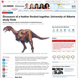 Dinosaurs of a feather flocked together, University of Alberta study finds - Edmonton