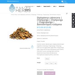 Puchase Diplopterys cabrerana