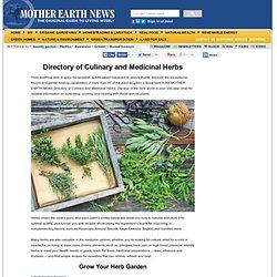 Directory of Culinary and Medicinal Herbs - Real Food