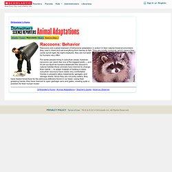 Dirtmeister: Animal Adaptations