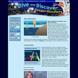 Deep Hypersaline Anoxic Basins (DHABs) : The Halocline