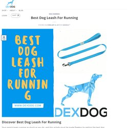 Discover Best Dog Leash For Running
