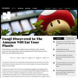 Fungi Discovered In The Amazon Will Eat Your Plastic