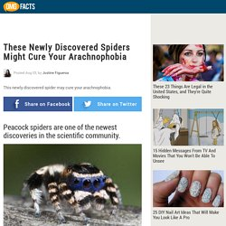 These Newly Discovered Spiders Might Cure Your Arachnophobia