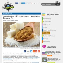 Newly Discovered Enzyme Prevents Sugar Being Stored As Fat