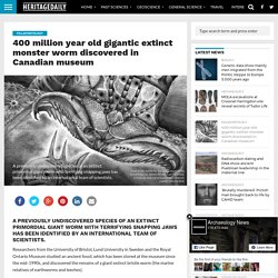 400 million year old gigantic extinct monster worm discovered in Canadian museum – HeritageDaily