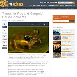 'Pinocchio' Frog and 'Gargoyle' Gecko Discovered