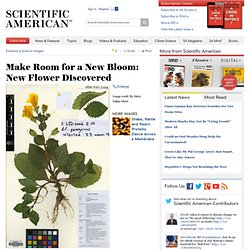 Make Room for a New Bloom: New Flower Discovered: Scientific American Gallery