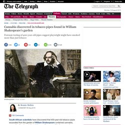 Cannabis discovered in tobacco pipes found in William Shakespeare's garden