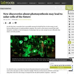 New discoveries about photosynthesis may lead to solar cells of the future Trending