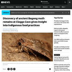 Discovery of ancient Bogong moth remains at Cloggs Cave gives insight into Indigenous food practices