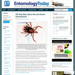 ENTOMOLOGY TODAY 05/07/17 CDC Study Sheds Light on New Lyme Disease-Causing Bacteria