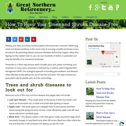 How To Keep Your Trees and Shrubs Disease-Free