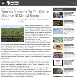GROWING PRODUCE 01/02/14 Tomato Diseases On The Rise In Absence Of Methyl Bromide