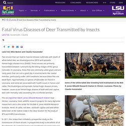 LSUAGCENTER 29/05/20 Fatal Virus Diseases of Deer Transmitted by Insects