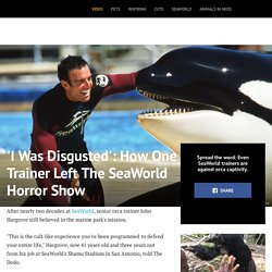 'I Was Disgusted': How One Trainer Left The SeaWorld Horror Show