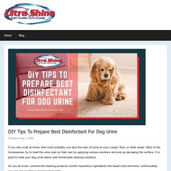 DIY Tips On Best Disinfectant For Dog Urine By Professionals of Riverside